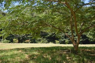屋外,緑,散歩,木陰,レジャー,大きな木,お散歩,草木,お出かけ