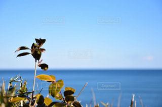 海,屋外,晴れ,青空,枝,葉っぱ,レジャー,茨城,お散歩,お出かけ