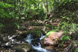 屋外,水,散歩,林,木漏れ日,小川,岩,木陰,レジャー,お散歩,せせらぎ,草木,お出かけ,お天気