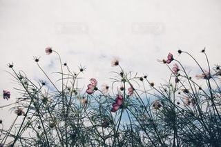 自然の写真・画像素材[2485565]