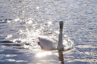 水面に反射した光の写真・画像素材[2630552]