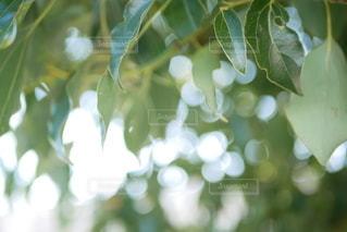 校内の植物の写真・画像素材[2726071]