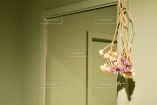 ピンクと白の花の写真・画像素材[2824355]