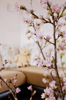 花のある暮らしの写真・画像素材[2925731]
