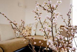 花のある暮らしの写真・画像素材[2925732]