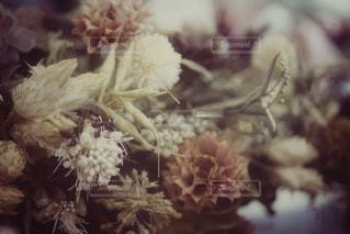 花のクローズアップの写真・画像素材[2950187]