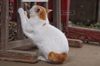 猫,動物,屋外,白,オレンジ,ペット,人物,座る,ネコ,爪とぎ