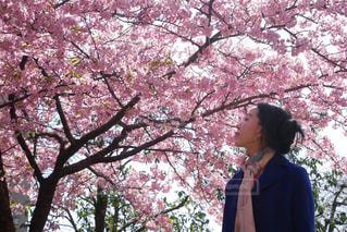 女性,1人,風景,花,春,桜,木,屋外,花見,樹木,お花見,人,イベント,立つ,河津桜,草木,さくら,40代,ブロッサム