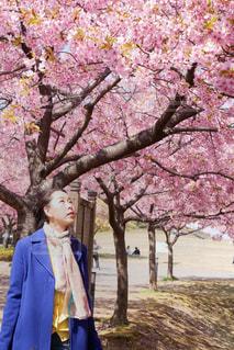 女性,1人,花,春,桜,木,屋外,花見,樹木,お花見,人,イベント,立つ,河津桜,草木,さくら,40代,ブロッサム