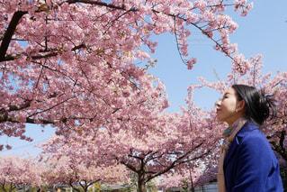 女性,1人,花,春,桜,木,屋外,花見,樹木,お花見,横顔,人,笑顔,河津桜,桜の花,さくら,まとめ髪,40代,ブロッサム