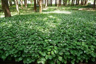 緑の植物の写真・画像素材[3165012]