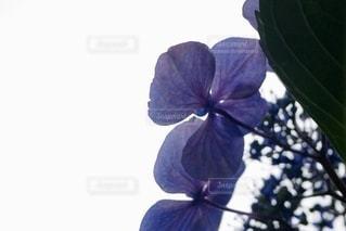花のクローズアップの写真・画像素材[3345848]