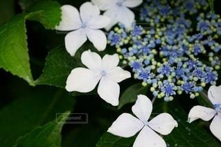 花のクローズアップの写真・画像素材[3345850]