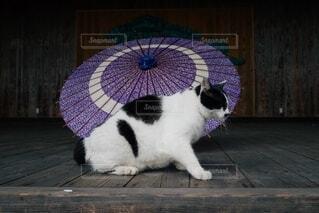 傘と猫の写真・画像素材[3680575]
