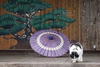傘と猫の写真・画像素材[3698498]