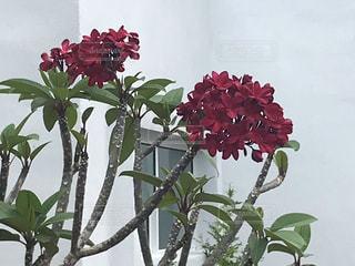 テーブルの上に花瓶の花の花束の写真・画像素材[1885940]