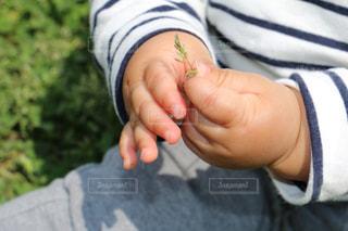赤ちゃんの手の写真・画像素材[1880165]