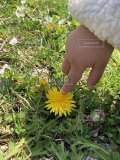 草の中の黄色い花の写真・画像素材[1885454]