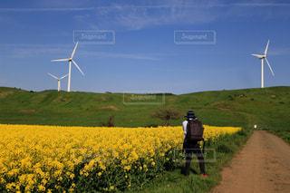 屋外,黄色,菜の花,景色,鮮やか,観光,美しい,樹木,癒し,菜の花畑,景観,キレイ,フォトジェニック