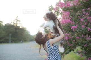 愛犬とサルスベリの写真・画像素材[2325451]