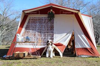 愛犬とキャンプ♪の写真・画像素材[2367067]