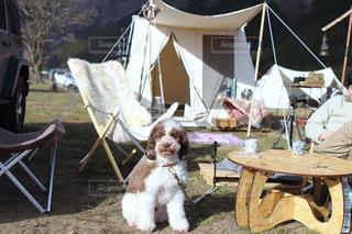 愛犬とキャンプ♪の写真・画像素材[2367076]