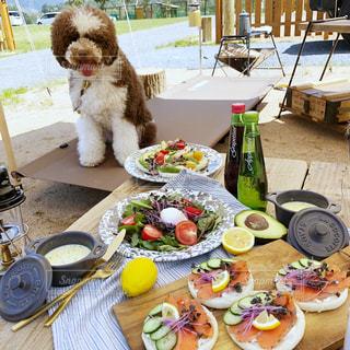 愛犬とキャンプご飯の写真・画像素材[2367106]