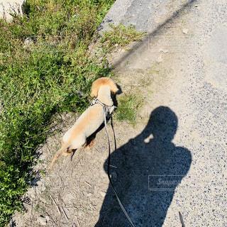 犬,風景,春,屋外,散歩,季節,明るい