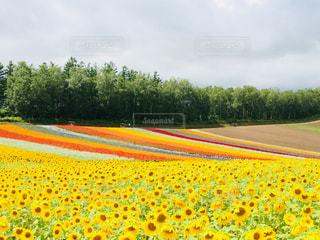 花の絨毯💐の写真・画像素材[1885595]