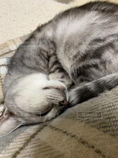 ベッドに横たわっている猫のクローズアップの写真・画像素材[2726224]