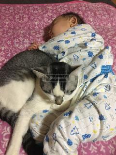 子ども,猫,動物,屋内,仲良し,ペット,寝る,人物,赤ちゃん,添い寝,ネコ