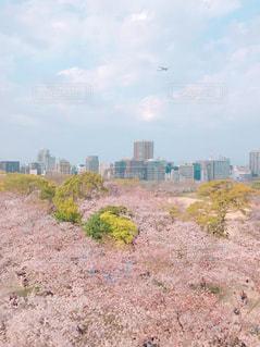 桜、飛行機、福岡の写真・画像素材[1903401]