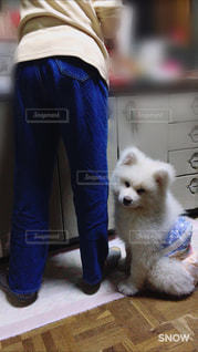 犬,動物,家,わんこ,ごはん,秋田犬,まったり,わんわん,わんちゃん,日本犬,待ち遠しい