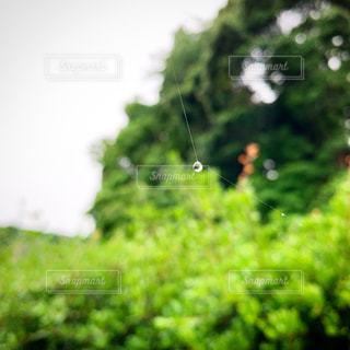 自然,風景,空,雨,屋外,雲,蜘蛛の巣,梅雨,日中