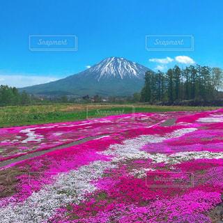 山を背景にした緑の畑のクローズアップの写真・画像素材[3029150]