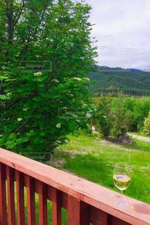飲み物,自然,風景,屋外,テラス,山,樹木,ワイン,グラス,乾杯,ドリンク,ニュージーランド,NZ,白ワイン,草木,ガーデン,New Zealand