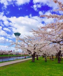 公園で凧を飛ばす大きな畑の写真・画像素材[3053315]