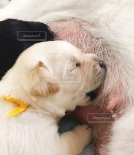 犬のベッドで寝ている猫の写真・画像素材[3360190]