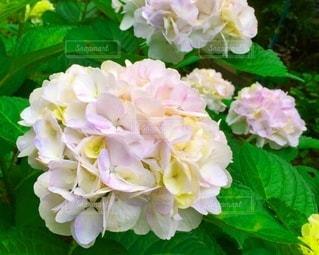 花のクローズアップの写真・画像素材[3375020]