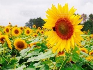 花のクローズアップの写真・画像素材[3493276]