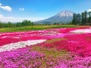 背景に山がある畑の写真・画像素材[4231894]