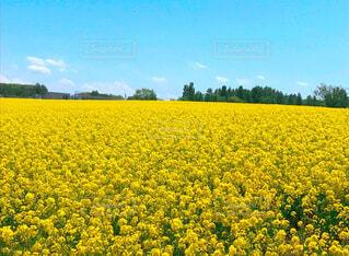 花畑のクローズアップの写真・画像素材[4292859]