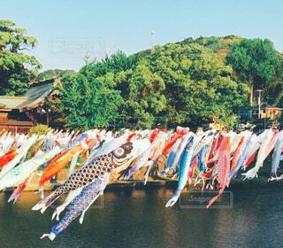 湖の隣に座っているカラフルな傘の列の写真・画像素材[4383726]