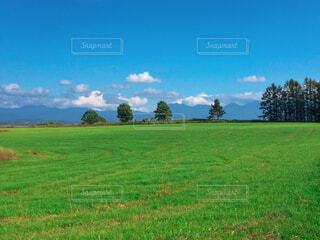 緑豊かな畑に立っている人の写真・画像素材[4408557]