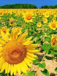 花のクローズアップの写真・画像素材[4747054]