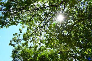 木のクローズアップの写真・画像素材[2272847]