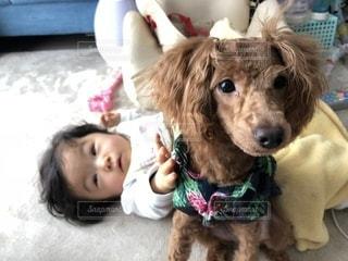 着ぐるみを着た犬の写真・画像素材[973382]