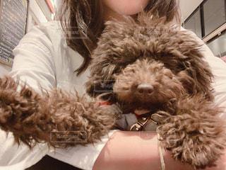 犬と私の写真・画像素材[2038702]