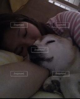 犬の写真・画像素材[2075357]