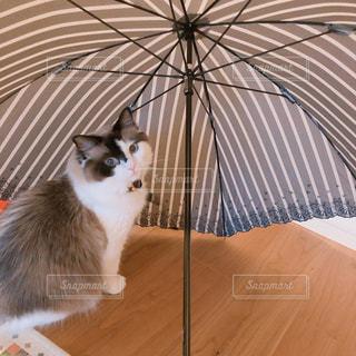 雨,傘,梅雨,天気,雨の日